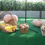 dani polja kukuruza