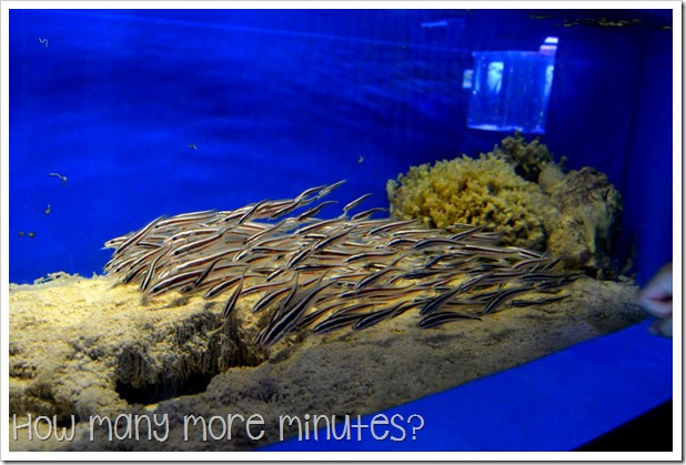 Townsville Aquarium | How Many More Minutes?