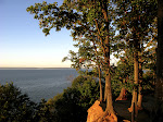 Trees above the Chesapeake Bay, Elk Neck State Park, near North East, Maryland, near the border to Delaware.