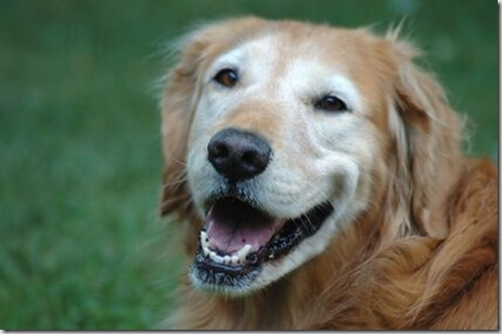 i tumori nel cane anziano