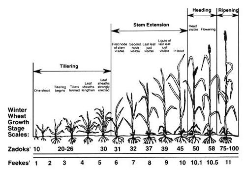 spring nitrogen applications on barley