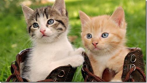 1123cute-cats-wallpapers-background-95