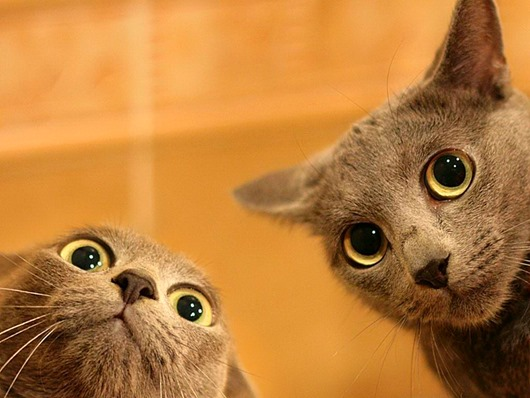 wallpapers_cats_597