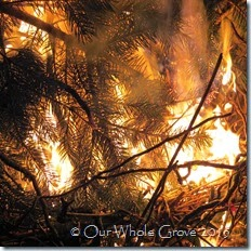ice, boughs, fire