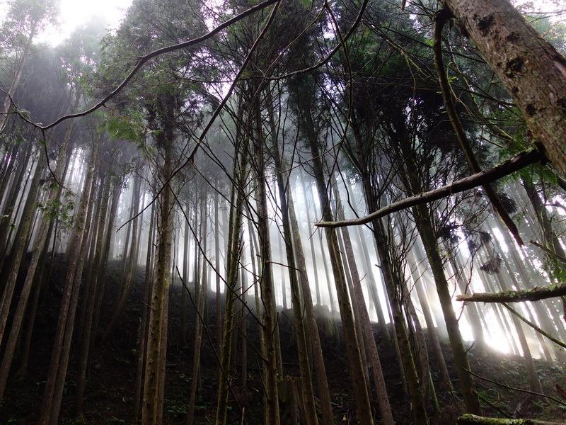 2013_1126-1129 鹿林山-1_238