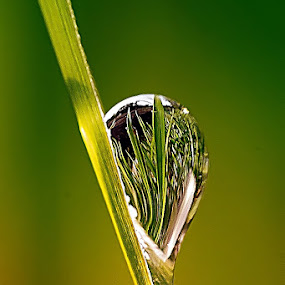 by Heru S. Tyon - Nature Up Close Leaves & Grasses