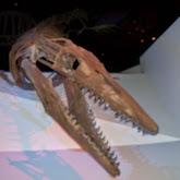 Houston Museum of Natural Science - 116_2654.JPG