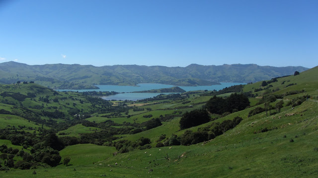 Catching our first glimpse of the Akaroa Harbor.