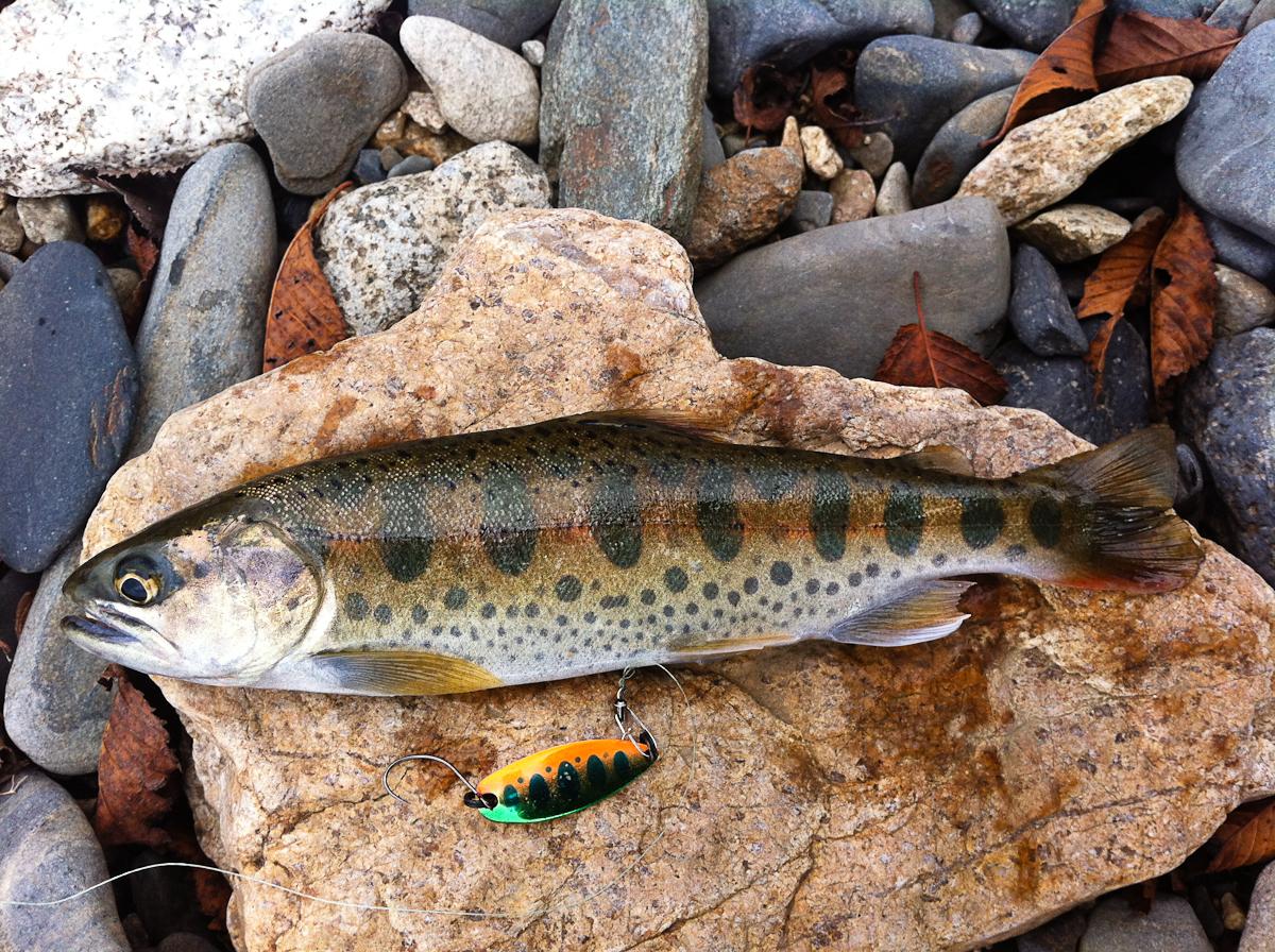 видео рыбалка на ручьевую форель