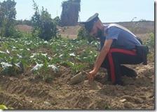 Campo broccoli su una discarica illegale