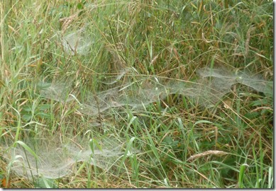 1 cobwebs in the mist