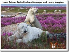 ursos-polares-curiosidades_thumb[1]