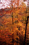 Autumn colors at sunset, Green Ridge State Park in Western Maryland.