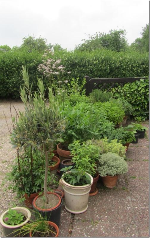 Mobiler Kräutergarten auf der Terrasse