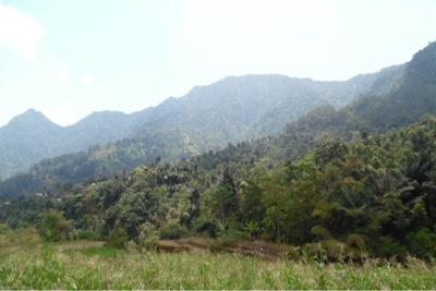petungkriyono, nature, landscape
