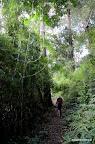 Później przeprawialiśmy się przez dżungę...