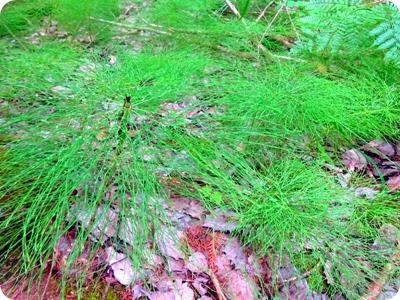 Wm Derby Nature Preserve