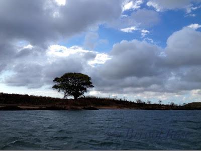 Fraser Island Wind Warning