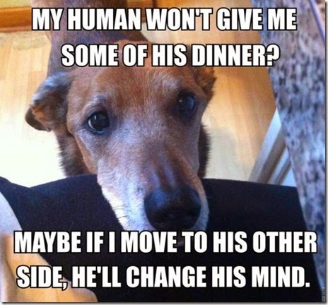 dog-owners-understand-025
