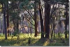 Campsite view 4
