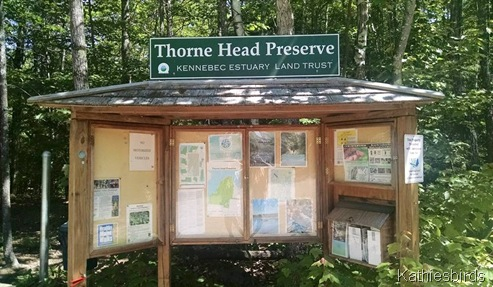 17. Thorne Head 6-17-14