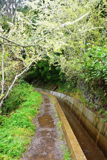 Autant d'eau sur le chemin que dans la levada. Et sur le chemin, il y a en plus la boue.