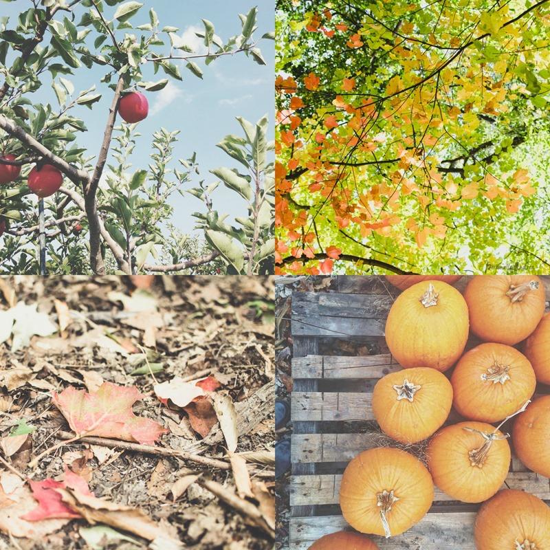 How to Photograph Fall |  via Instagram