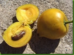 Garcinia dulcis 1