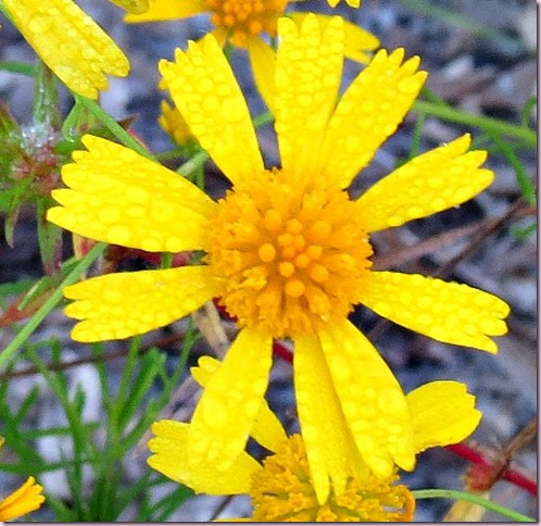 flowercropIMG_4075