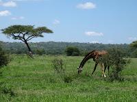 Northern Circuit Safari - Tarangire National Park