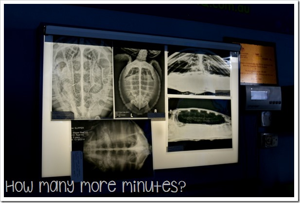 The Turtle Hospital at the Reef HQ Aquarium | How Many More Minutes?