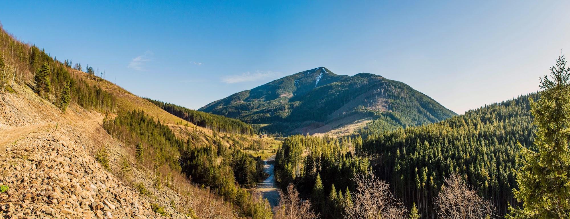 Дарів, Даріїв, Дарівське лісництво, Лімниця, лісовозна дорога, лісовозка