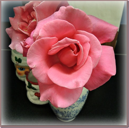 roseDSCN0478