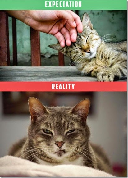 cats-expectations-reality-007