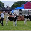 cattle16.jpg