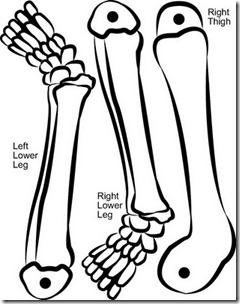 esqueleto para armar buscoimagenes com (4)