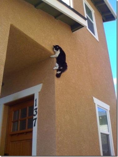 gatos sitios para esconderse (9)