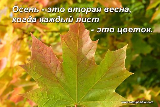 Кленовый лист осенью