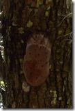 Strange fungus under branches 2