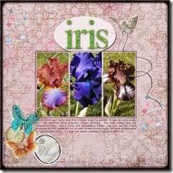 multi-designer---iris