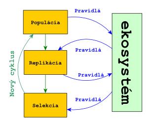Schéma evolučného mechanizmu