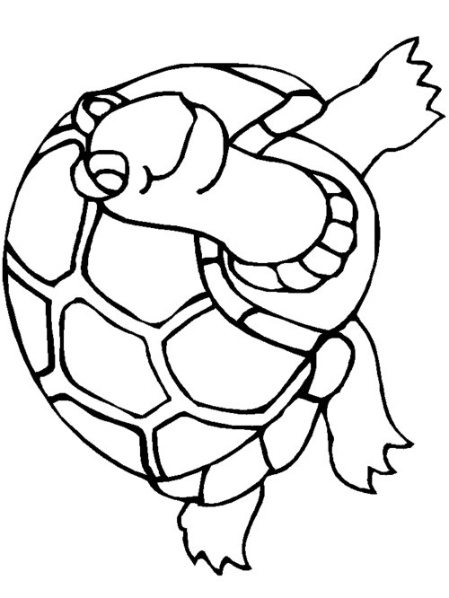 [PDF]Turtle Coloring and Activity Book The University of
