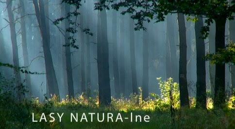 Lasy naturalne (2010) PL.TVRip.XviD / PL