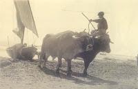 Arrastre dels bous (2)