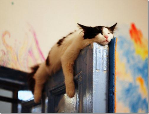 gatos sitios para esconderse (1)