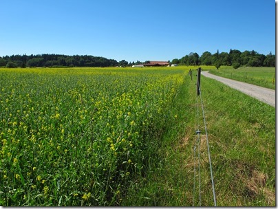 summer field in sweden photo by susan wellington