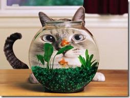 gatos divertidos buscoimagenes (16)