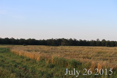 July 26 the field