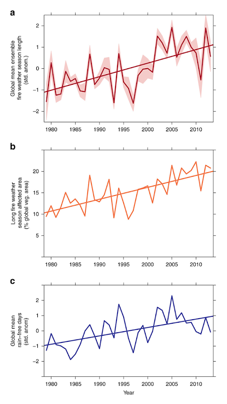 (a) Changes in the global mean fire weather season length from 1979 to 2013 with 95 percent confidence limits between ensemble members (shaded area). (b) Total global annual area affected by long fire weather seasons (>1σ of historical mean). (c) Inter-annual variations in the standard anomalies of global mean rain-free days. Global mean rain-free days accounted for 49.7 percent of the variation in global fire weather season length and 33.8 percent of the variation in global long fire weather season affected area. Graph: Jolly, et al., 2015 / Nature Communications