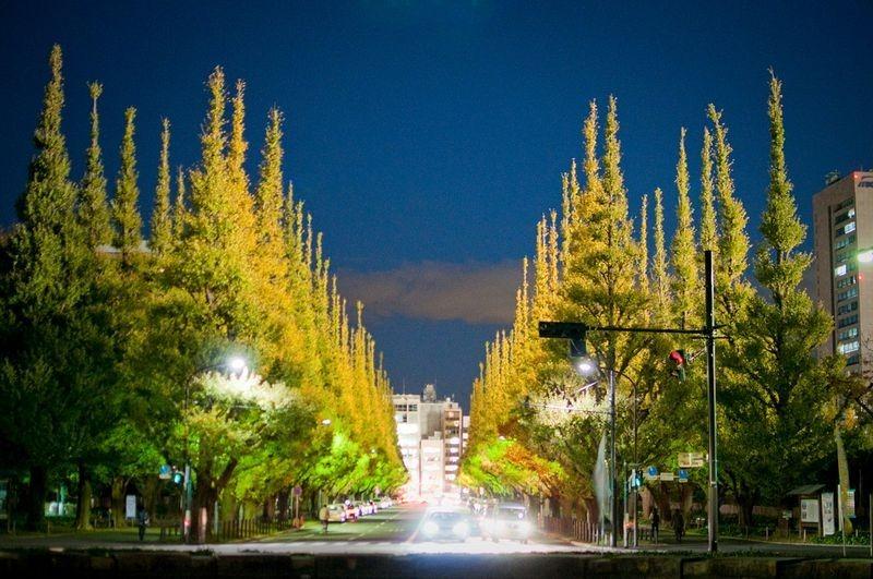 ginkgo-avenue-tokyo-5